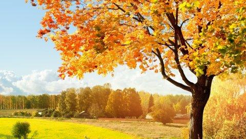 поле, трава, осень, листья, деревья