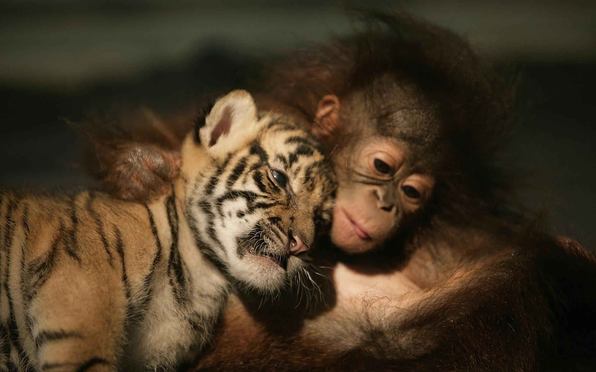 Картинки с собаками обезьянками тиграми, мире отправить