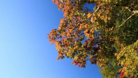 дерево, небо, листва, осень