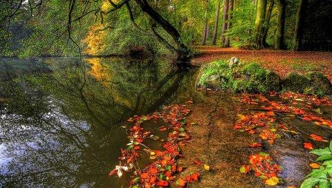 река, трава, листы, дерева