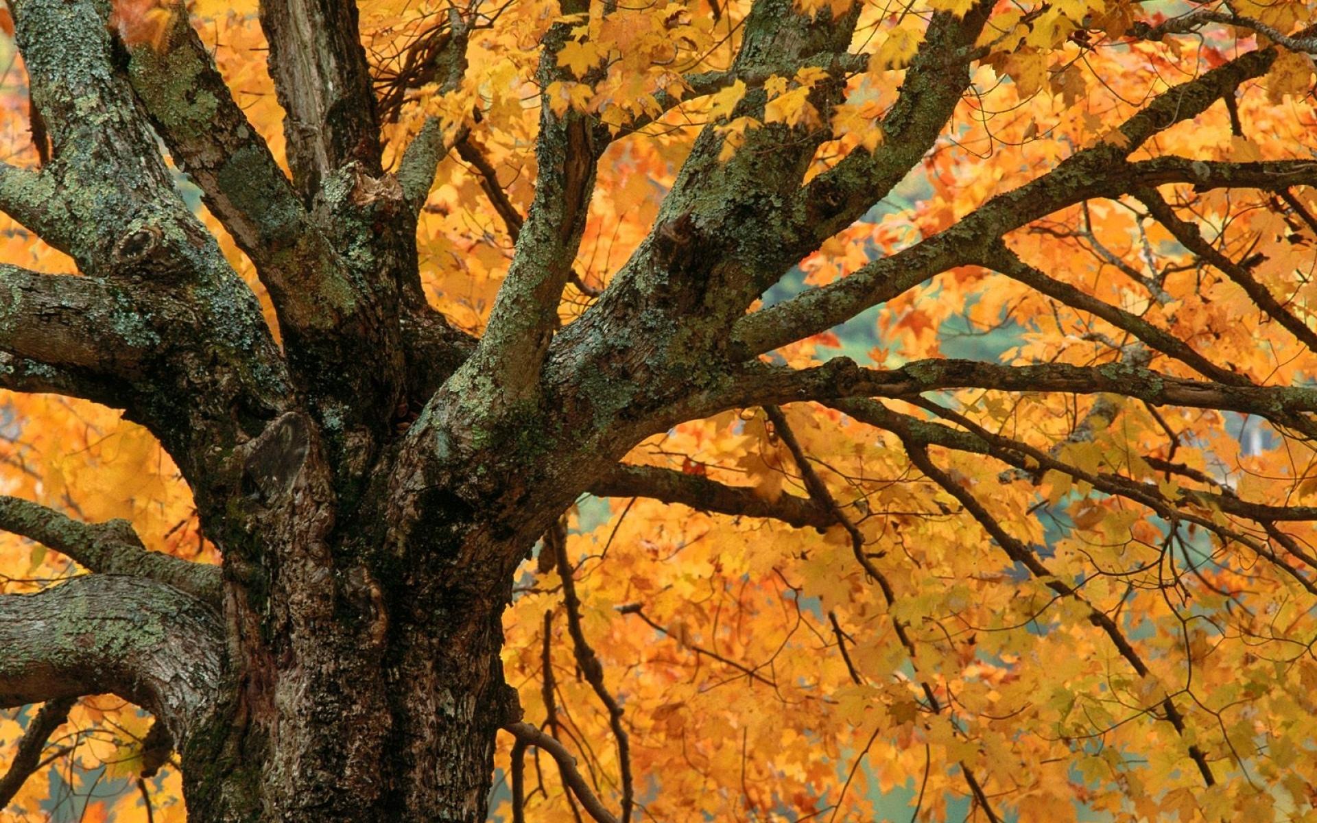 Картинки дерево, ветви, листья, сухие фото и обои на рабочий стол