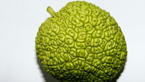 фрукты, яблоко, полезные