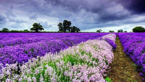 поле, цветы, расстояние, лето