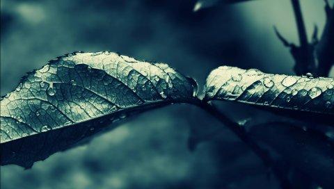 капли, листья, форма
