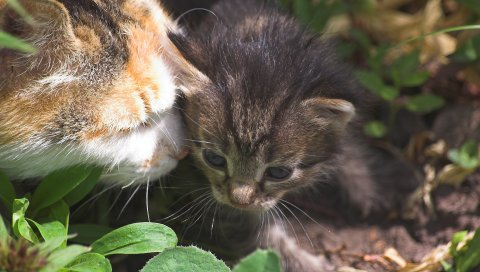котенка, кошка, уход, трава
