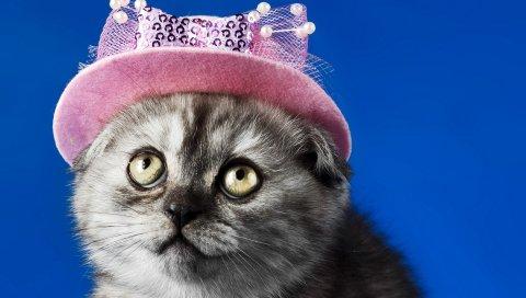 котенок, лицо, шляпа, глаза, красивая
