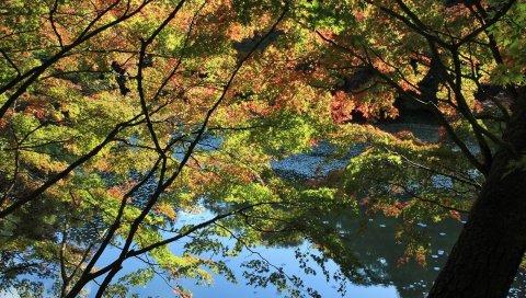деревья, осень, река