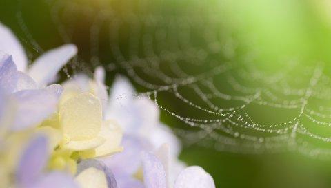 полотна, капли, цветы с
