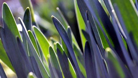 травы, растения, листья, макро