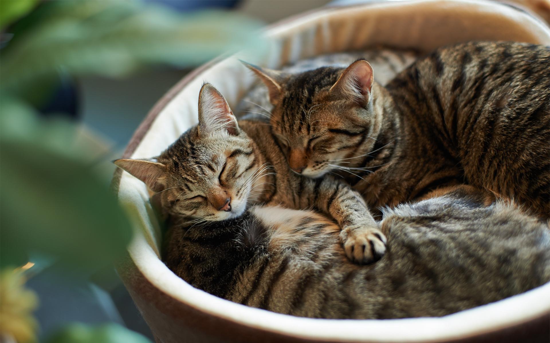 Аву машей, любовь к кошкам картинки