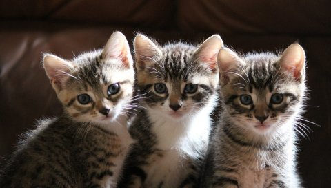котята, три, сидеть, смотреть