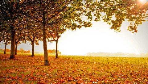 дерева , осень, листья, опавшие