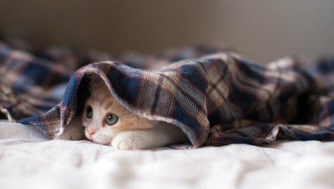 кот, лежа, котенок, игривый