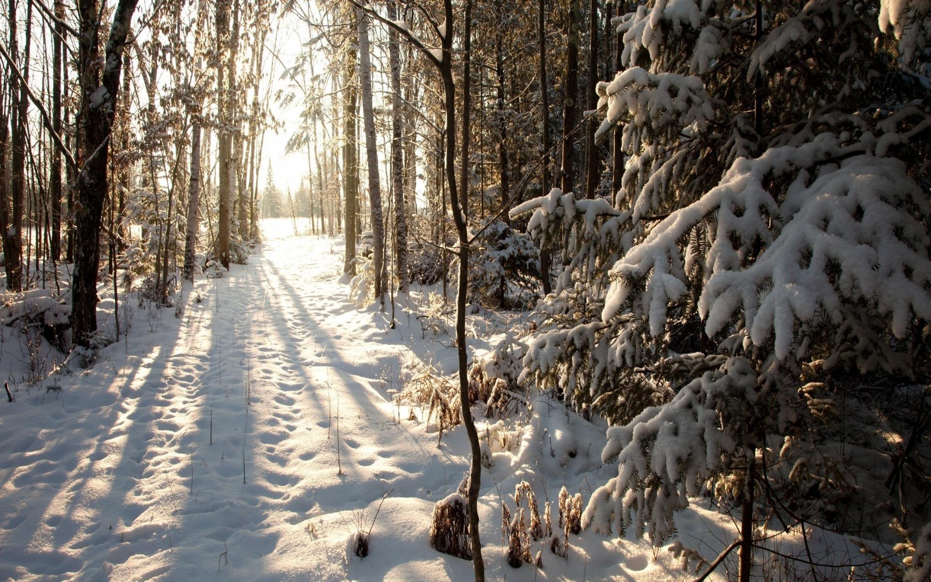 Картинки лес, снег, зима фото и обои на рабочий стол