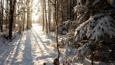 лес, снег, зима