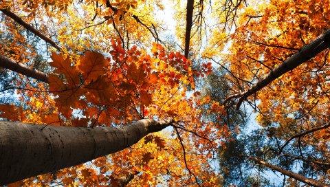 осень, деревья, небо