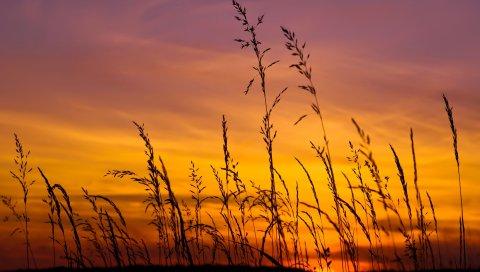 трава, закат, небо