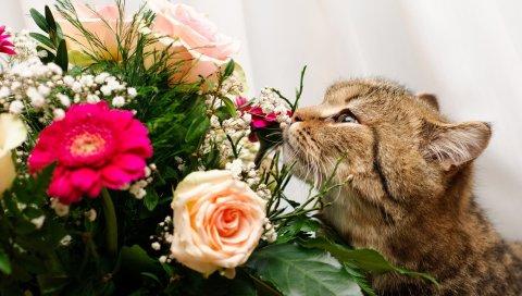кошка, лицо, цветок, роза, запах