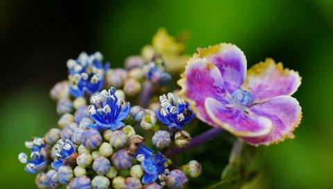 цветок, растение, лепестки, пятно