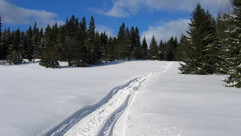 снег, след,зимний