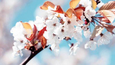 филиал, макро, цветы, цветение, растение, весна