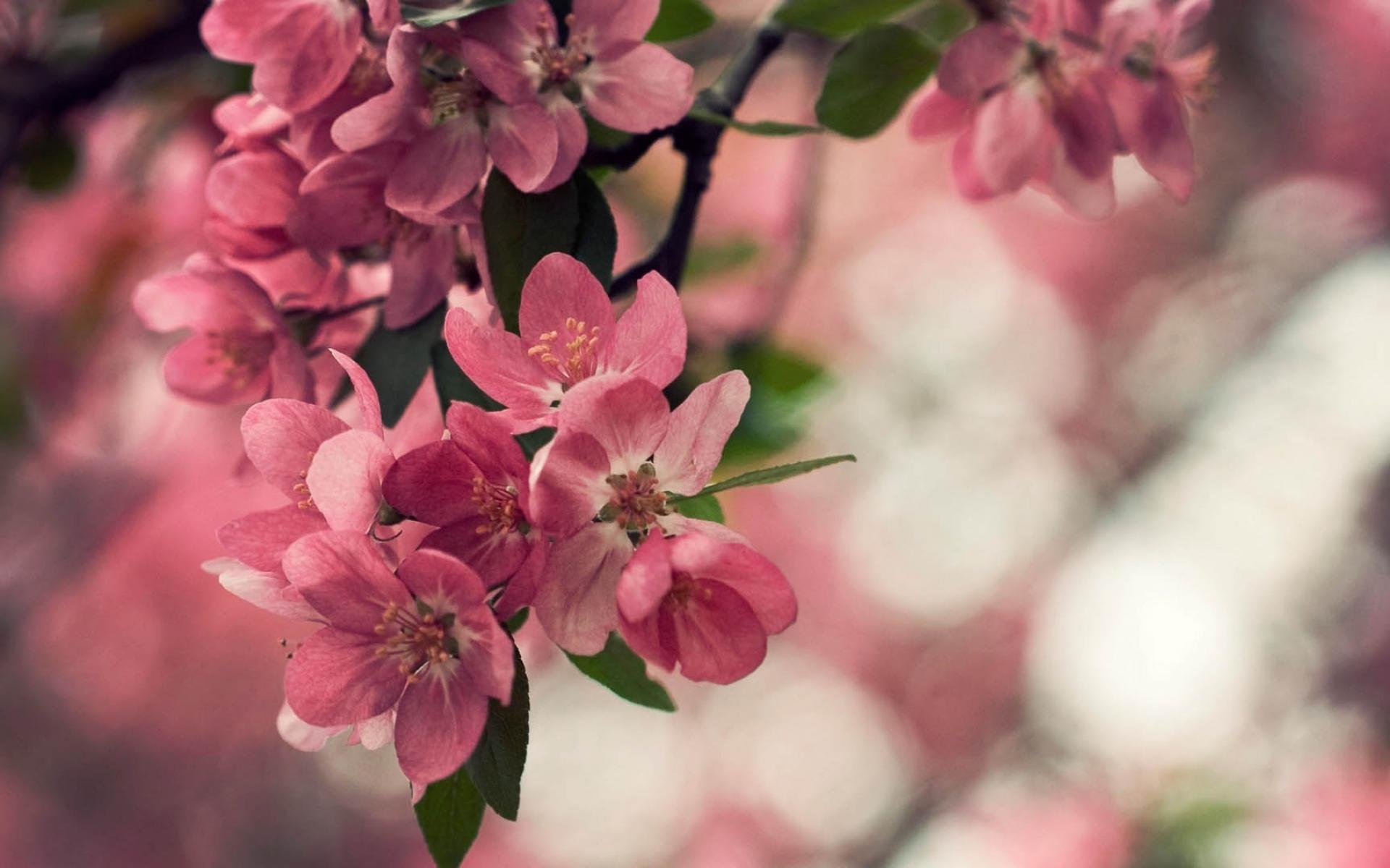 Фото розовых весенних цветов