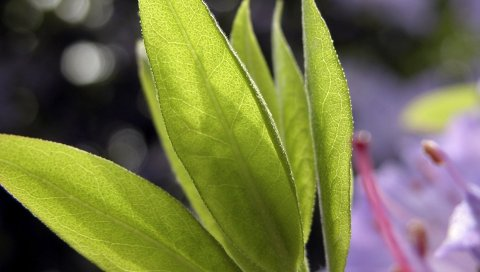 лист, зеленый, завод