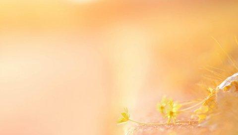 листья, трава, свет, фон