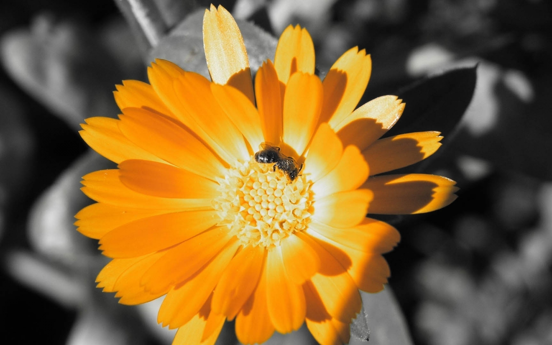 Картинки цветок, насекомое, лепестки фото и обои на рабочий стол
