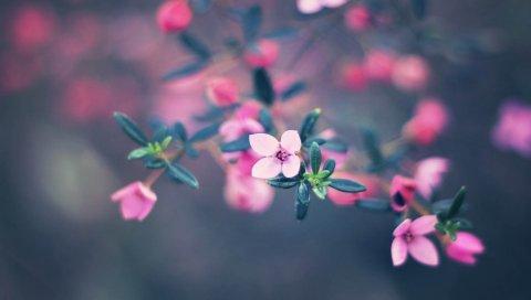 цветы, цветение, размытость
