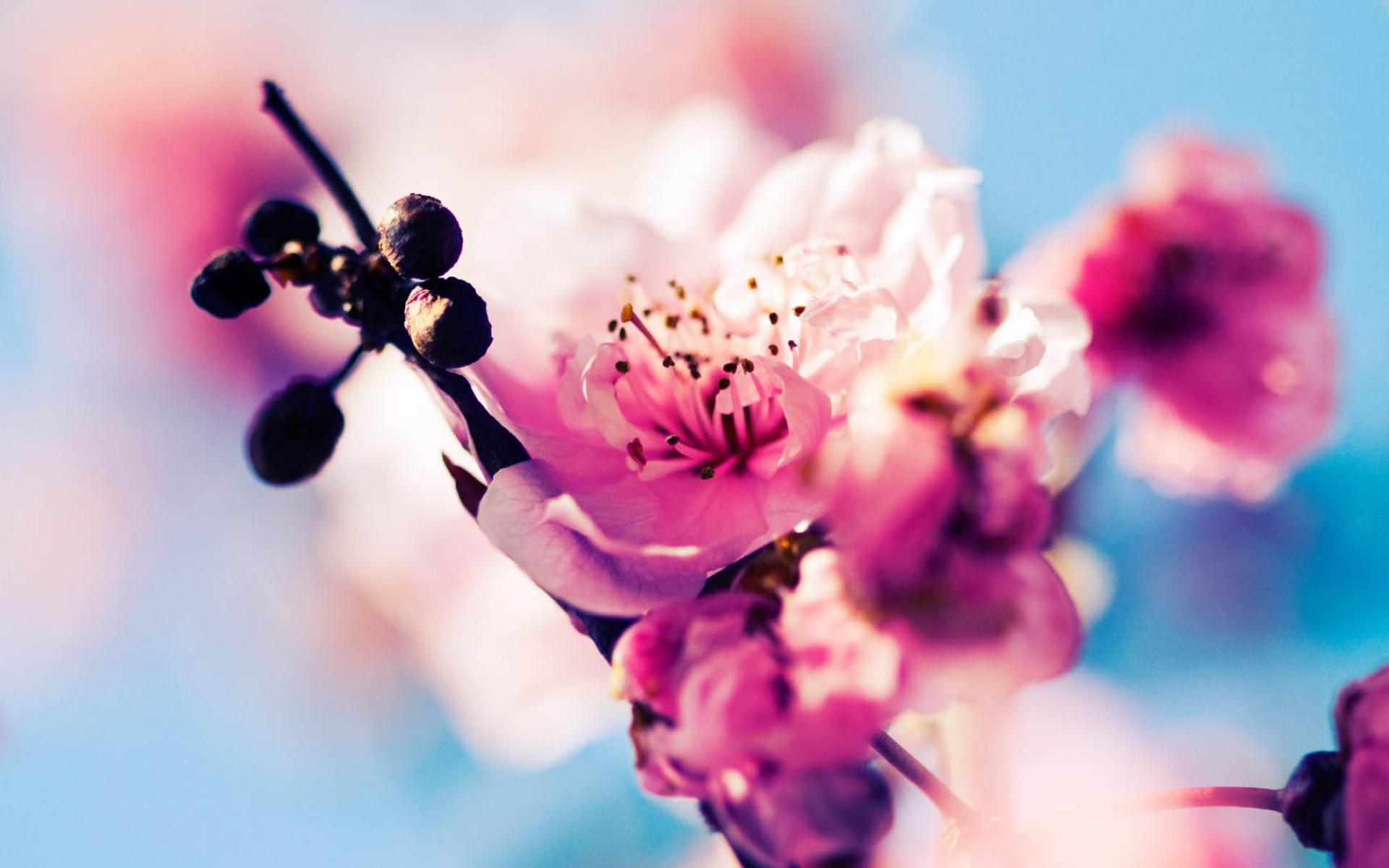 Картинки цветы, макро, цветение, весна фото и обои на рабочий стол