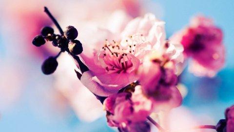 цветы, макро, цветение, весна