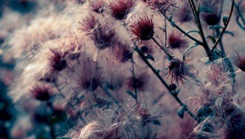 чертополох, цветок, паук холсты