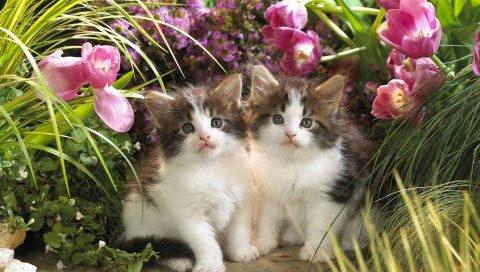 котят, пара, цветы, трава