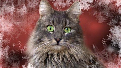 кот, взгляд, фон