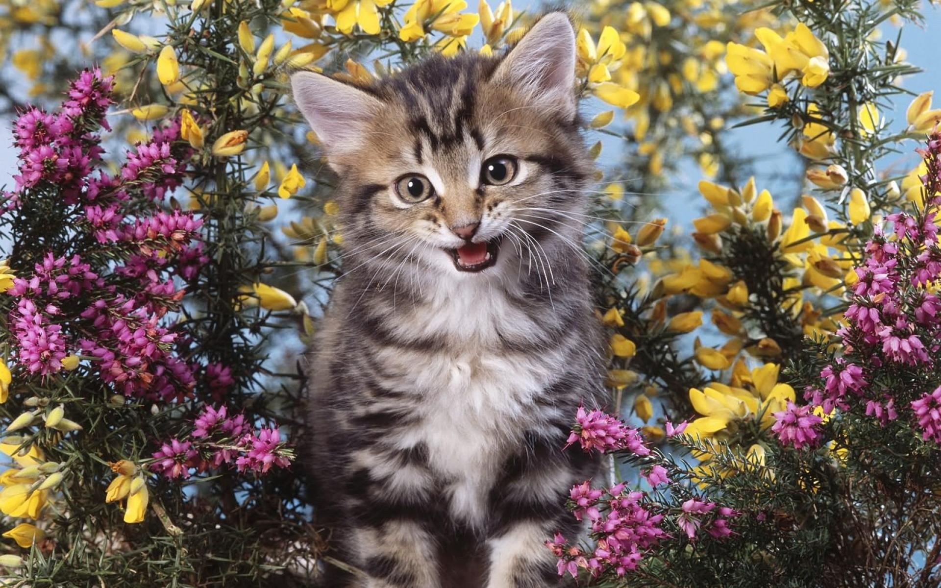 Красивые картинки цветов и котят