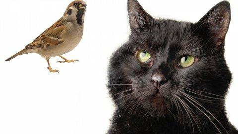 кошки, воробей, птица,охотничьи
