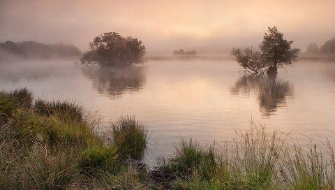 озеро, трава, река, туман