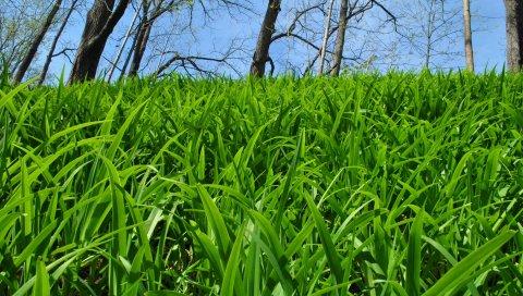 Трава, деревья, природа
