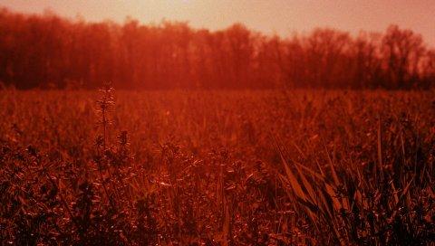 Трава, свет, закат