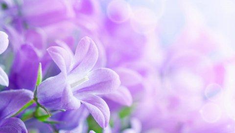 Цветы, сиреневые, светлые