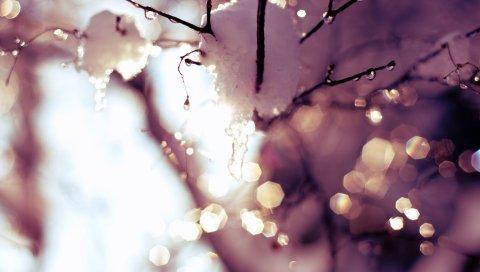 Ветка, снег, блики, свет