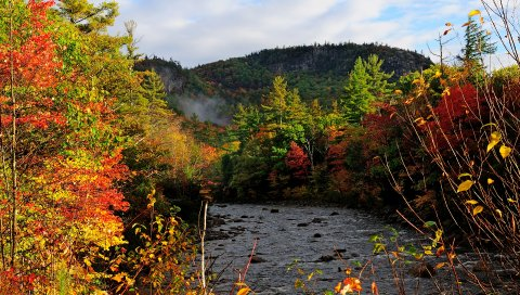 Осень, река, деревья, лес