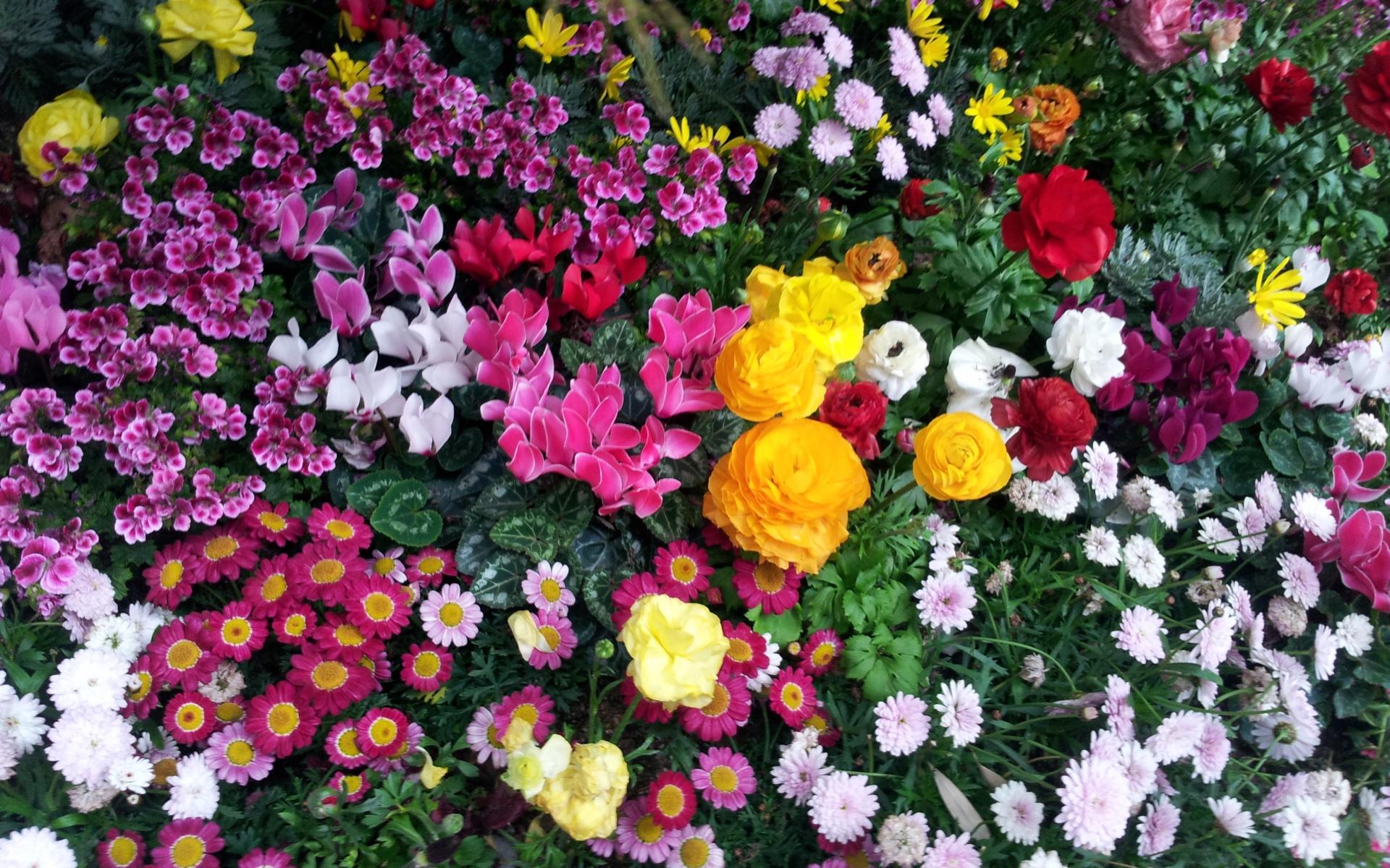 Названия и картинки разных цветов