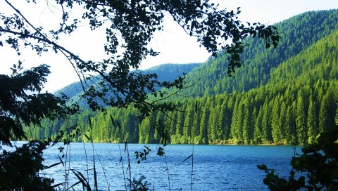 Озеро, лес, гора, ветка, пейзаж