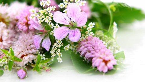 Цветы, лепестки, фиолетовый, светлый