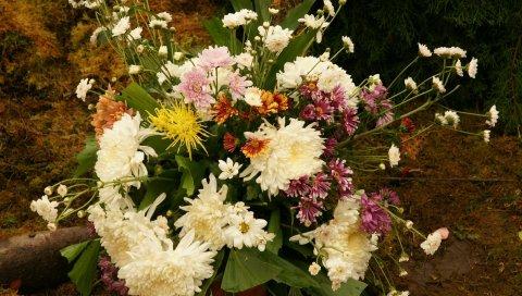 Цветы, цветы, растения, лепестки
