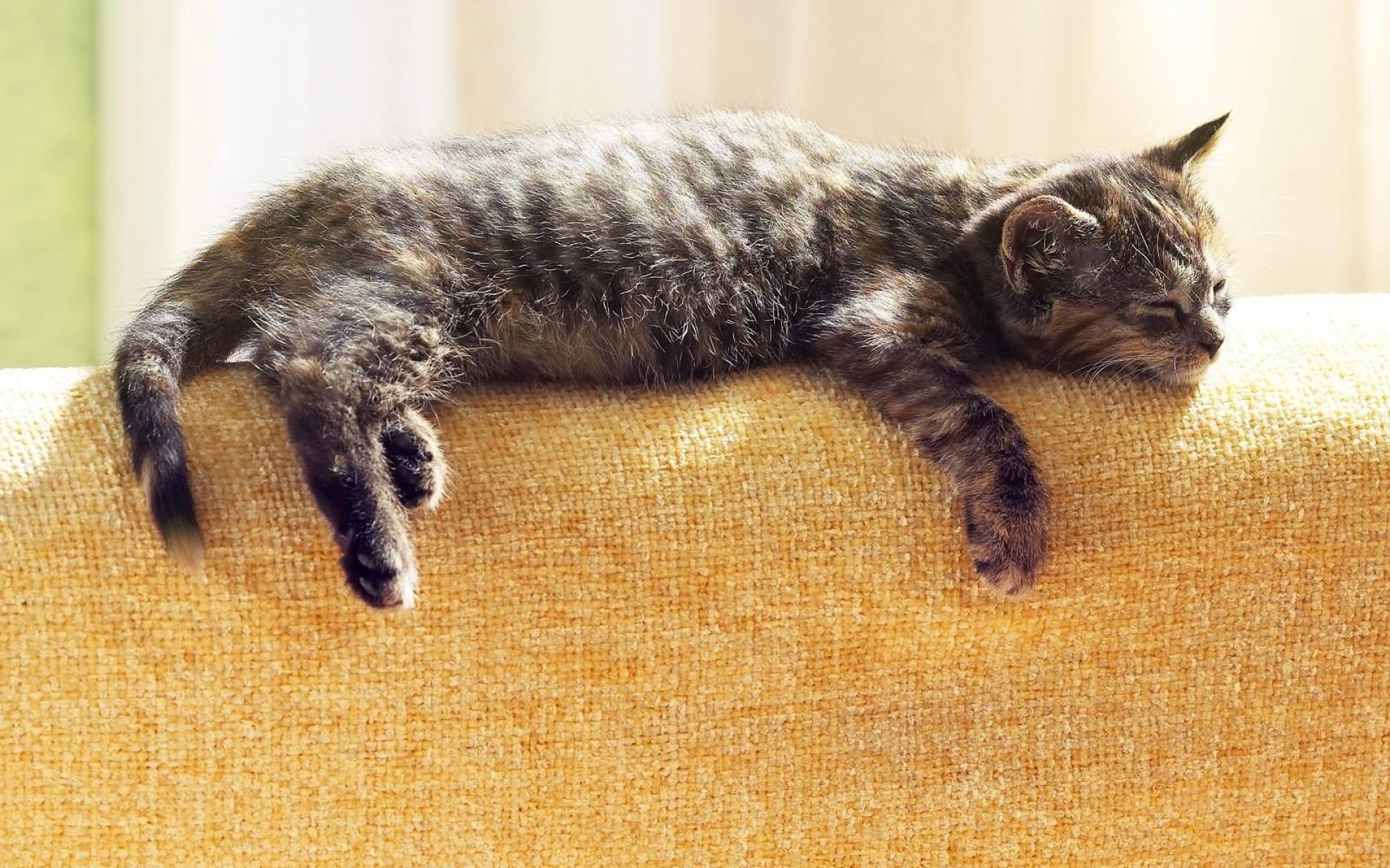 Картинки Кошка, лежа, спящая, табби фото и обои на рабочий стол