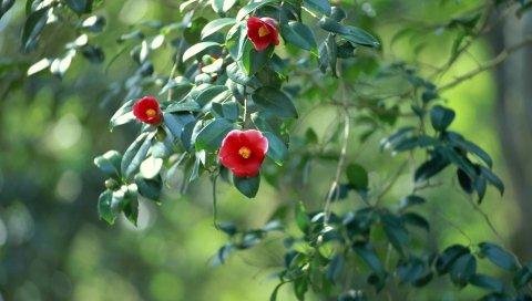 Цветы, ветки, листья