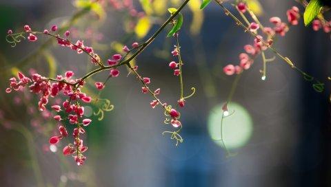 Растения, цветы, ветка